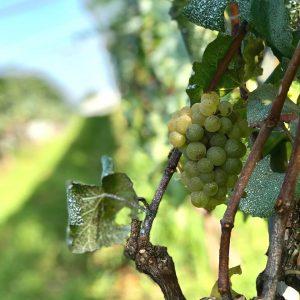 【Fête du vin à BLS】 BLSワイン祭2019